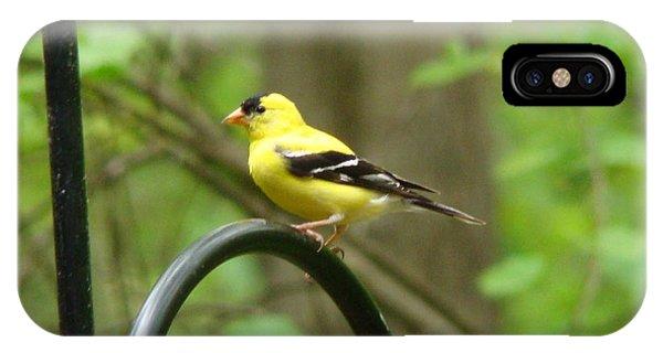 Golden Finch IPhone Case