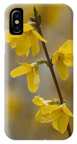 Golden Forsythia IPhone Case