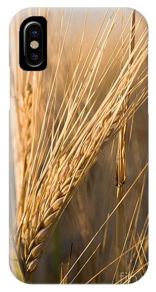 Golden Grain IPhone Case