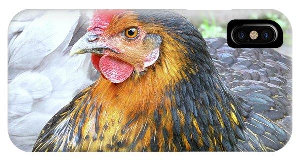 Golden Hen IPhone Case