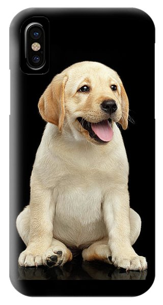 Golden Labrador Retriever Puppy Isolated On Black Background IPhone Case
