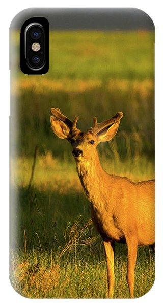 IPhone Case featuring the photograph Golden Light Buck II by John De Bord