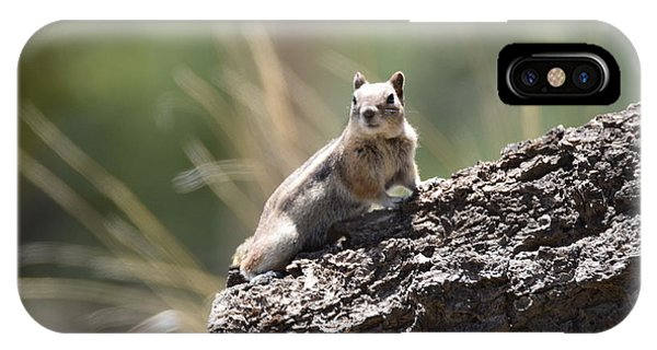 IPhone Case featuring the photograph Golden Mantled Ground Squirrel by Margarethe Binkley