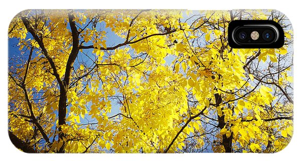 Tree iPhone Case - Golden October Tree In Fall by Matthias Hauser
