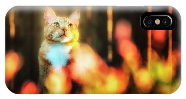 Golden Orange Tabby IPhone Case