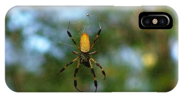 Golden Orb Weaver 2 IPhone Case