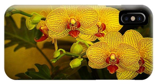 Golden Orchids IPhone Case