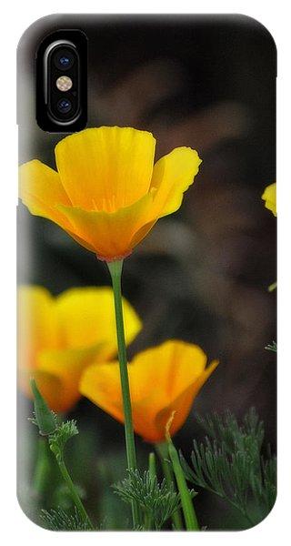 Golden Poppies  IPhone Case