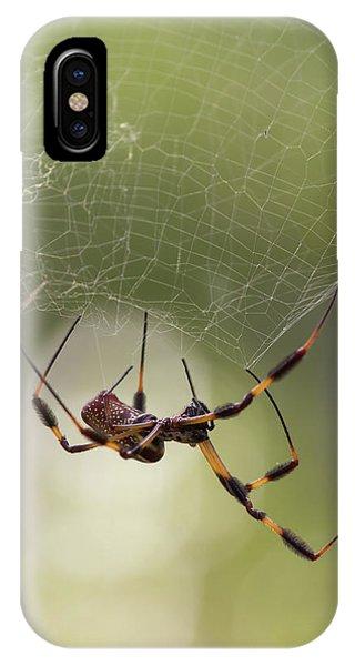 Golden-silk Spider IPhone Case