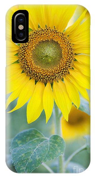 Sunflower iPhone X / XS Case - Golden Sunflower by Tim Gainey