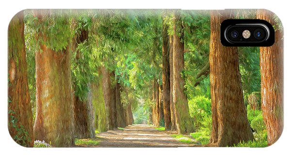 Treeline iPhone Case - Golden Tree Avenue 2 by Roy Pedersen