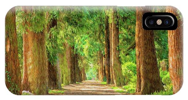 Treeline iPhone Case - Golden Tree Avenue by Roy Pedersen