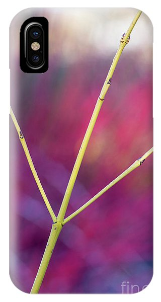 Golden Gardens iPhone Case - Golden Twig Dogwood Abstract by Tim Gainey