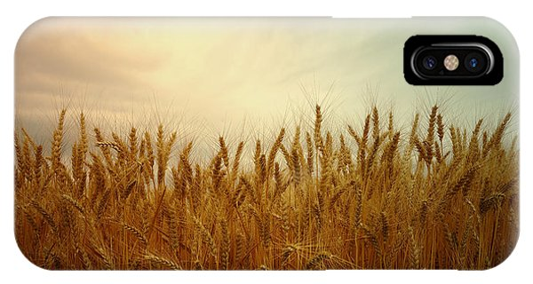 Golden Wheat IPhone Case