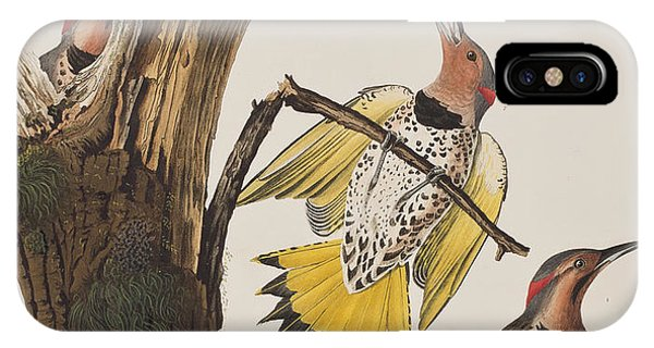 Golden-winged Woodpecker IPhone Case