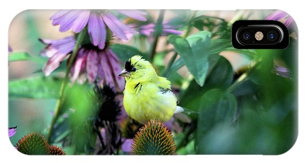 Goldfinch On Coneflowers IPhone Case
