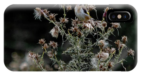 Goldfinch Sitting On A Thistle IPhone Case