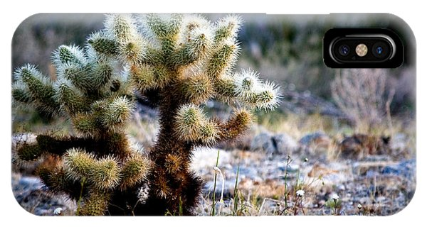 Teddy Bear Cholla iPhone Case - Good Morning Teddy by Chris Brannen