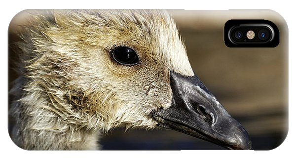 IPhone Case featuring the photograph Gosling - Growing Up by Sue Harper