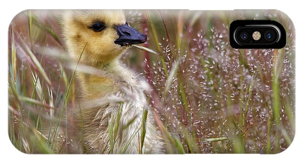 Gosling In The Meadow IPhone Case