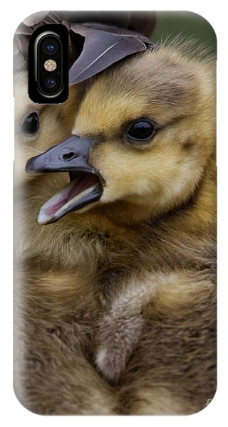 IPhone Case featuring the photograph Gosling - Make Room by Sue Harper