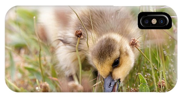 Gosling Nibble IPhone Case