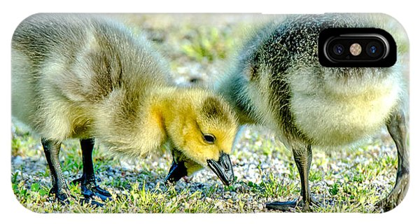 Goslings Snacking IPhone Case