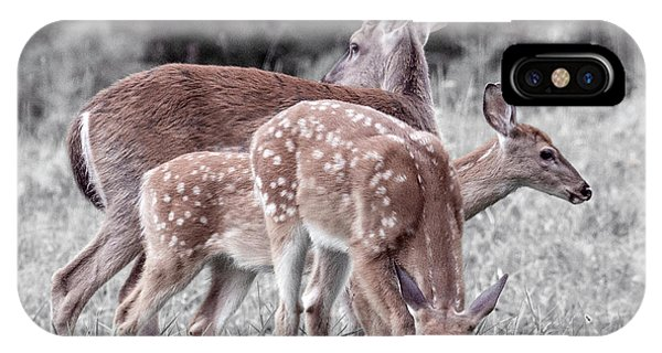 White Tailed Deer iPhone Case - Humor Got Some Doe And Two Bucks by Betsy Knapp