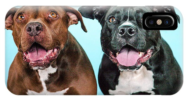 Pitbull iPhone Case - Gozerandmetta by Pit Bull Headshots by Headshots Melrose