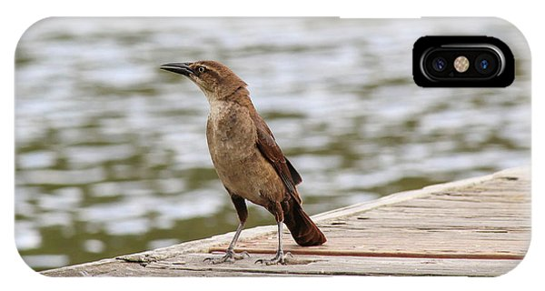 Grackle On A Dock IPhone Case