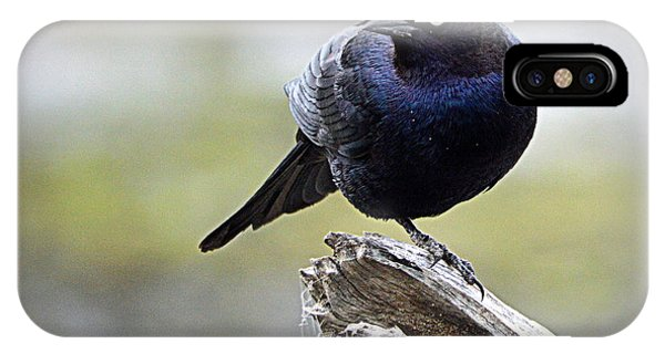 Grackle Resting IPhone Case