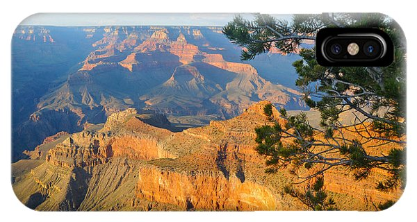 Grand Canyon South Rim - Pine At Right IPhone Case
