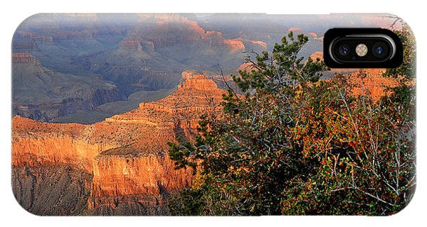 Grand Canyon South Rim - Red Berry Bush Along Path IPhone Case