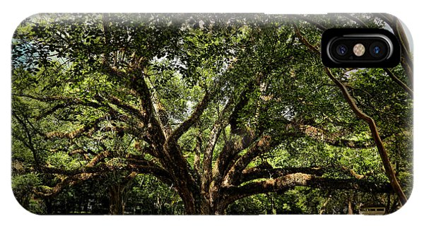 Grand Oak Tree IPhone Case