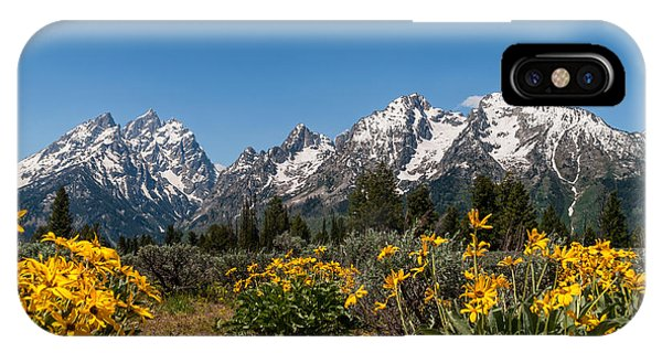 Teton iPhone Case - Grand Teton Arrow Leaf Balsamroot by Brian Harig