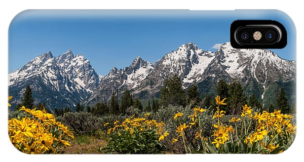 Grand Teton Arrow Leaf Balsamroot IPhone Case