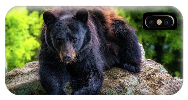 Grandfather Mountain Black Bear IPhone Case