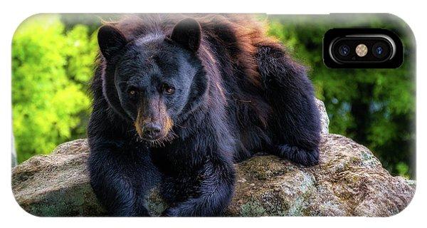 Grandfather Mountain Black Bear IPhone Case