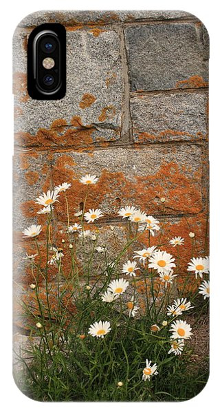Granite Daisies IPhone Case