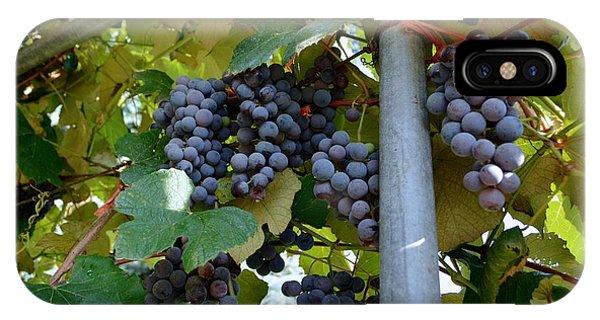 Grape Arbor 1 IPhone Case