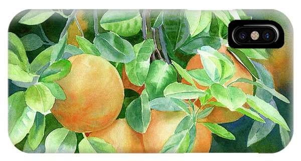 Grapefruit iPhone Case - Grapefruit With Background by Sharon Freeman