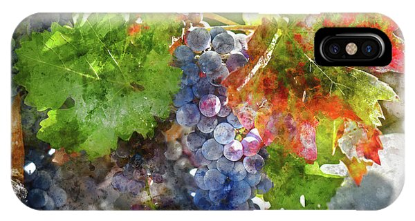 Grapes On The Vine In The Autumn Season IPhone Case