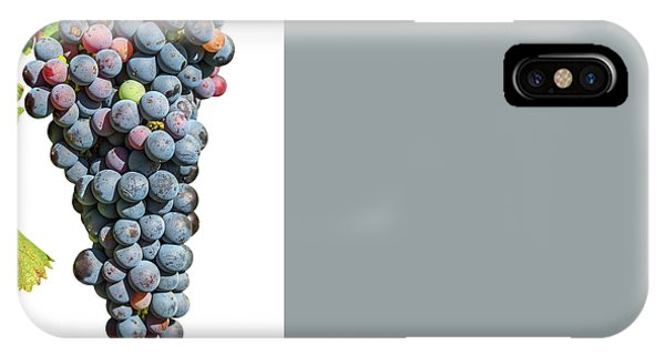 Grapes On Vine IPhone Case