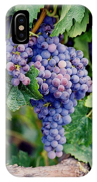 IPhone Case featuring the photograph Grapes by Sandy Adams