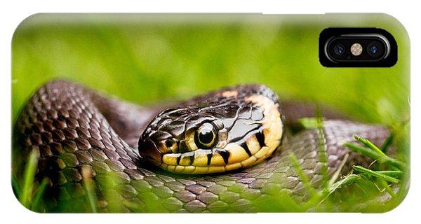 Grass Snake - Natrix Natrix IPhone Case