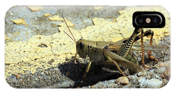 Grasshopper Laying Eggs IPhone Case