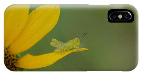 Little Things iPhone Case - Grasshopper On A Flower Petal by Jeff Swan