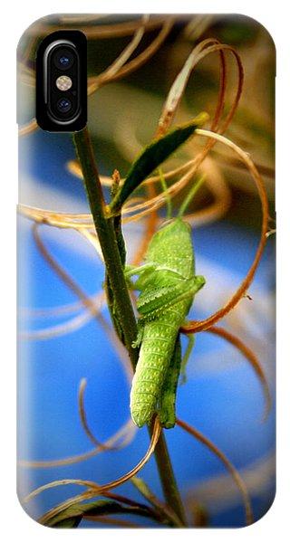 Grasshopper iPhone Case - Grassy Hopper by Chris Brannen