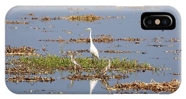 Kerala iPhone Case - Grat Egret - India by Joana Kruse