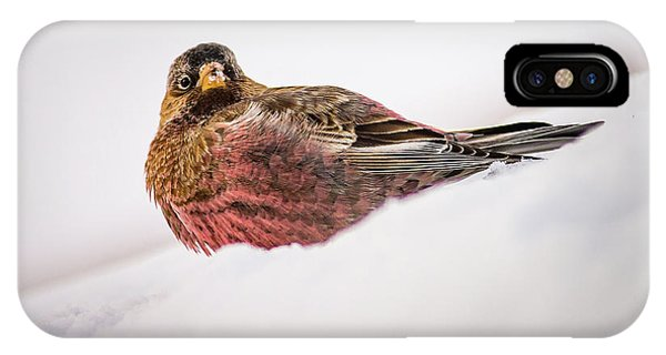 IPhone Case featuring the photograph Gray Capped Rosy Finch by John Brink
